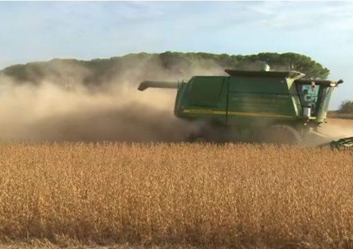 Agricultura de élite que se fortalece con información en tiempo real